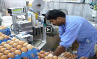 como_embalar_enfajado_huevos